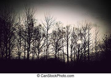 nu, arbres hiver
