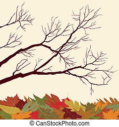 nu, folhas, ramos, caído