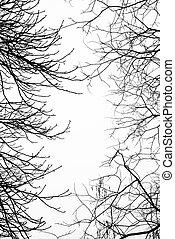 nu, leafless, filiais árvore, com, céu branco, em, a, fundo