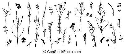 nu, plants., illustration., tiges, vecteur, sauvage, ensemble, (weeds), silhouette, usines