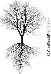nu, racines, arbre