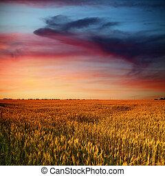 nuages, beauté, champ, coucher soleil, temps, blé