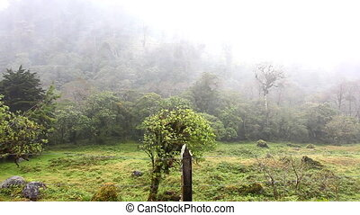 nuages, chargé, sur, mouvement, forêt tropicale, humidité