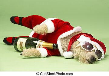 nuances, chien, bas, déguisement, santa, petit, champagne,...