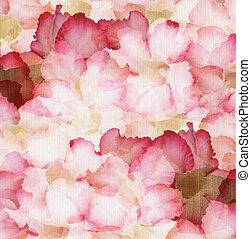 nube, rosa y rojo, desierto, subió pétalos