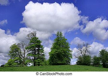 nubes, árboles