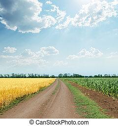 nubes, cielo, encima, soleado, campos, agricultura, camino