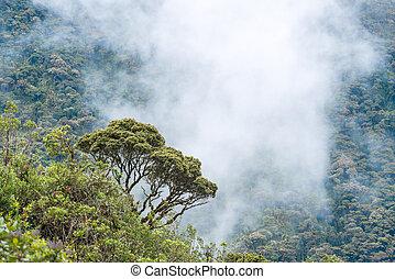 nubes, macas, envolver, andes., ecuador, colinas