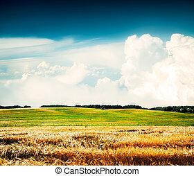 nubes, verano, trigo, paisaje, campo