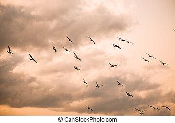nubi, cielo, tramonto, fondo, gregge, uccelli