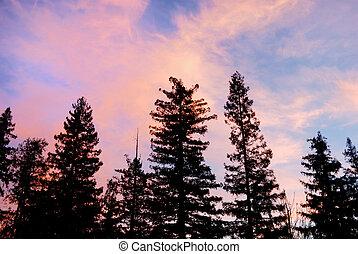 nubi, viola, albero, silhouette, tramonto, sopra