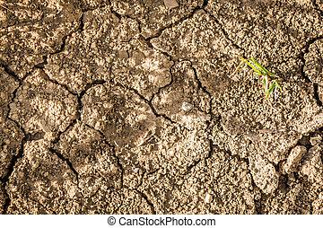 nueva vida, en, seco, tierra