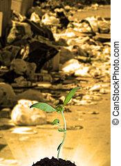 nueva vida, y, contaminación