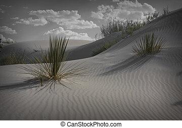 nuevo, arenas blancas, méxico