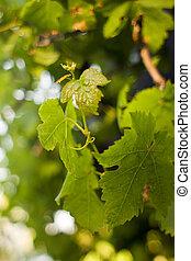 nuevo, permisos de uva
