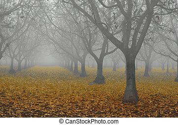 nuez, arboleda, en, niebla