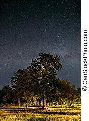 nuit, étoilé, chêne, parc, arbres, bois, vert, manière, sous, ciel, galaxie, laiteux