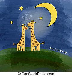 nuit, amour, pré, girafes