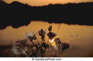 nuit, fleurs