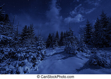 nuit, forêt, paysage, hiver