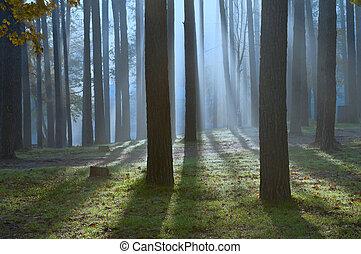 nuit, forêt