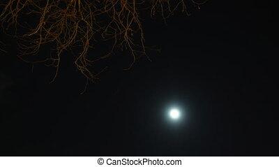 nuit, moon., timelapse, ciel, forêt