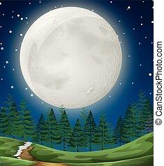 nuit, simple, forêt, scène
