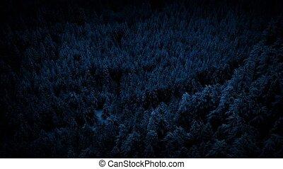 nuit, sur, voler, forêt, neigeux