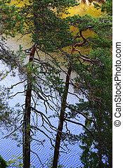 nuksio, nemzeti park, tó, sóvárog fa