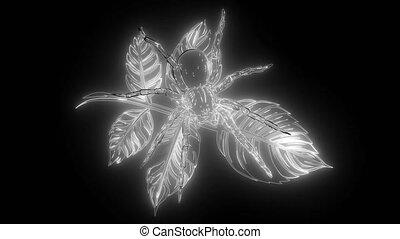 numérique, néon, toile, vidéo, rainforest, araignés