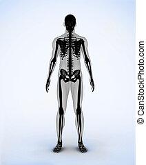 numérique, noir, squelette