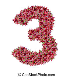 Number 3 made from bromeliad flowers isolated on white background with clipping path