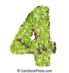 Number 4 made from hydroponics leaf vegetable isolated on white background