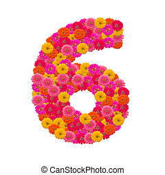 number 6 made from Zinnias flowers