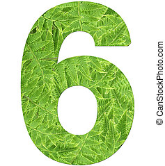 number 6 with fern texture, isolated on white background, font Helvetica World, bold