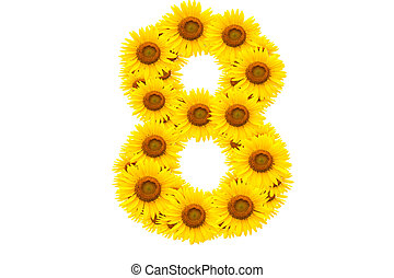 Number 8,  Sunflower isolate on White background