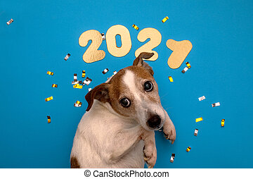 Numbers 2021 on blue background with dog