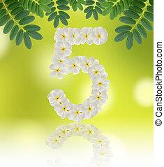 Numbers five made of tropical flowers frangipani (plumeria) on n