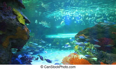 Numbers of swimming tropical fish - Colorful tropical coral...