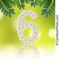 Numbers six made of tropical flowers frangipani (plumeria) on na