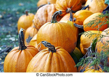 Numerous natural pumpkin - Close-up on numerous natural...
