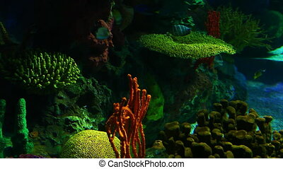Numerous Tropical Fish swim in colorful coral