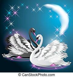 nuotare, notte, due, luna, ardendo, stelle, sotto, cigni
