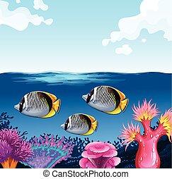 nuoto, fish, sotto, tre, oceano