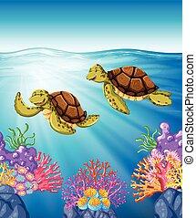 nuoto, mare, due, tartarughe, sotto
