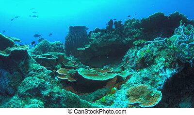 Nurse shark on a coral reef. Ginglymostomatidae - Nebrius ferrugineus, 4k footage