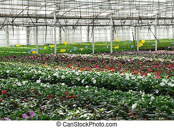 nursery., flor, plants., estufa, cultivado