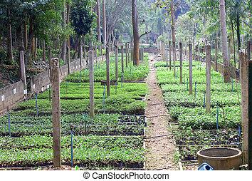 nursery seedling