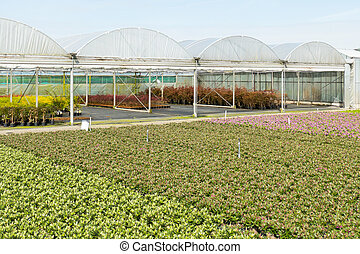Nursery with greenhouses.