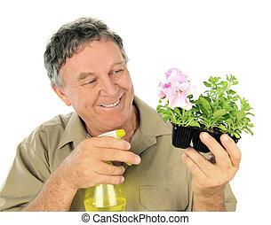 Middle aged nurseryman sprays a punnet of seedlings.